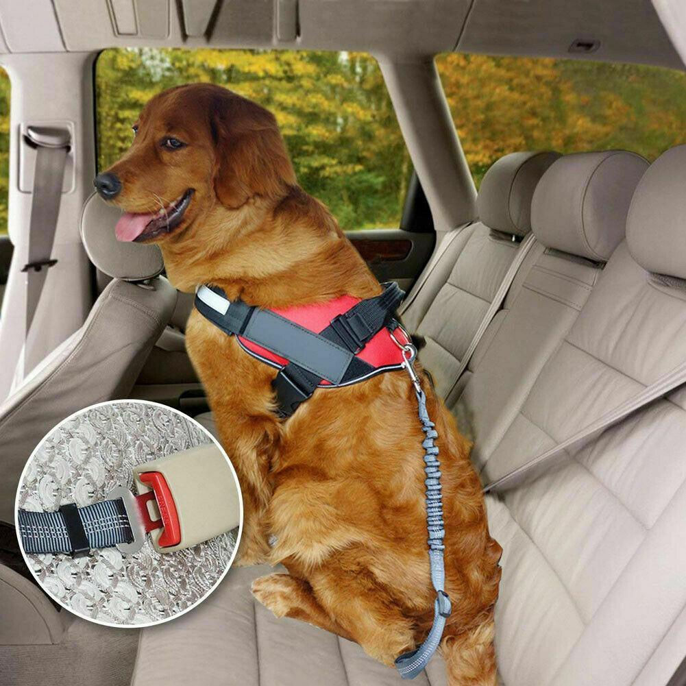 Dog Seat Belt Protects